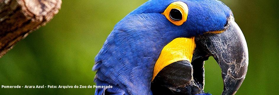 Pomerode - Arara Azul